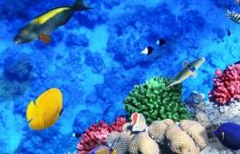 egypt_diving