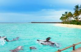 maldives_ocean