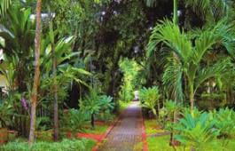 pattaya-garden-104