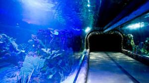 В Мехико появился гигантский аквариум