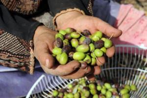 Андалузский Фестиваль оливок в Испании