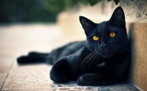 Итальянцы готовятся к празднованию Дня чёрных котов