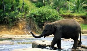 Любите сафари на слонах? Тогда вам на Шри-Ланку