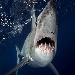 На Мальдивах можно прослушать лекции об акулах