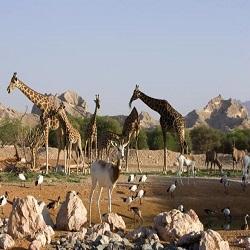 В ОАЭ появится уникальное сафари