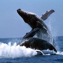 В Доминикане можно понаблюдать за китами