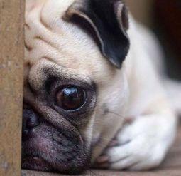 Первая российская авиакомпания вводит ограничения на перевозку собак