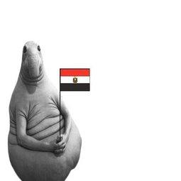 Новости из Египта