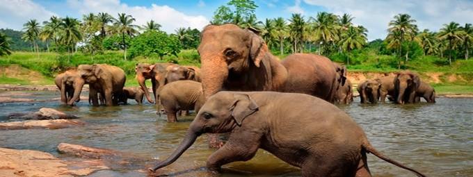 Шри-Ланка или по другому Цейлон!