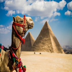 Аэропорт Каира проходит финальную проверку