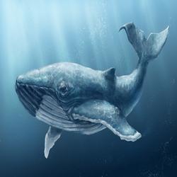 Горбатые киты в Доминикане