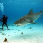 Акулы в Тайланде.