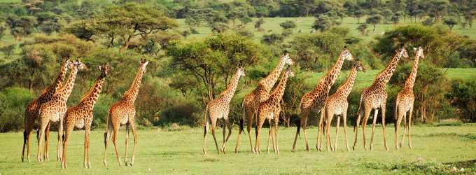 Африканская красотка Танзания! о.Занзибар