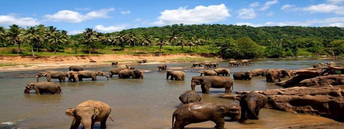Незабываемая Шри-Ланка!